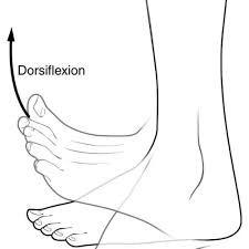 حرکت dorsiflexion  پا