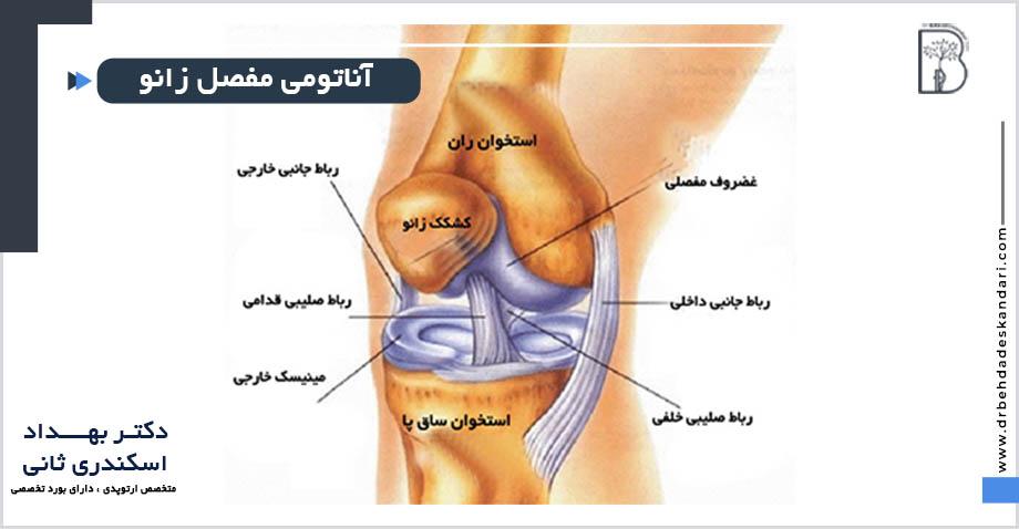 آناتومی و ساختار مفصل زانو